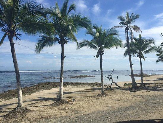 Puerto Viejo Beach: Common sight as you walk along.