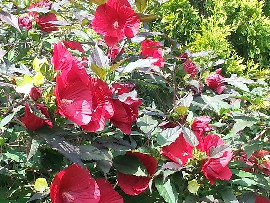 Wayne, Pensilvania: Flowes in the tea cup garden