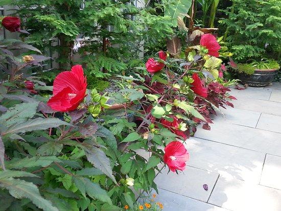 Wayne, Pensilvania: Flowers near Tennis Court Garden