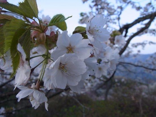Minano-machi, Ιαπωνία: いい香りがします