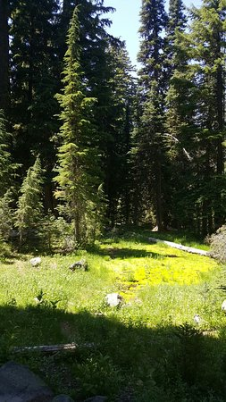 Castle Crest Wildflower Trail Crater Lake National Park