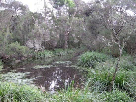 Wantirna, Australia: Great walk in suburbia