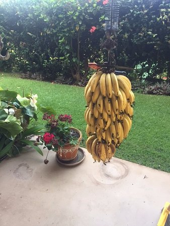 Hale Huanani Bed and Breakfast: Help yourself