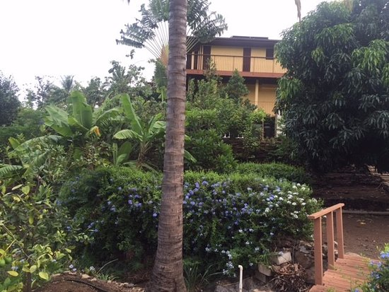 Hale Huanani Bed and Breakfast: View from the garden up to the room (not top floor)