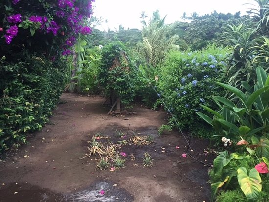Hale Huanani Bed and Breakfast: Garden