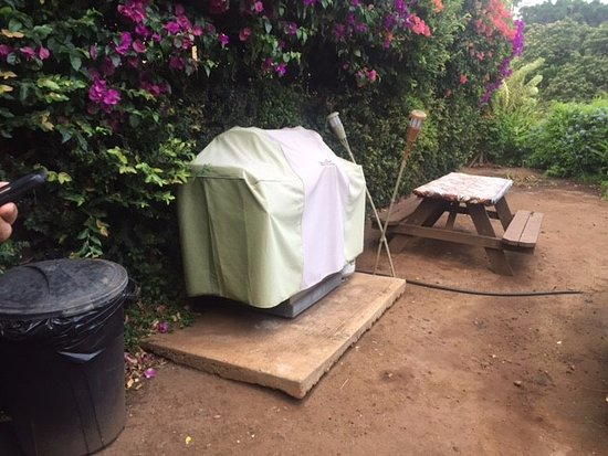Hale Huanani Bed and Breakfast: Communal grill and picnic area