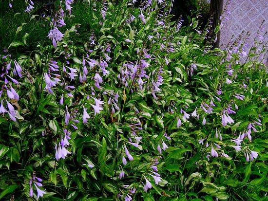 flowers in the garden (Venic Jian'guo Hotel, Dandong)