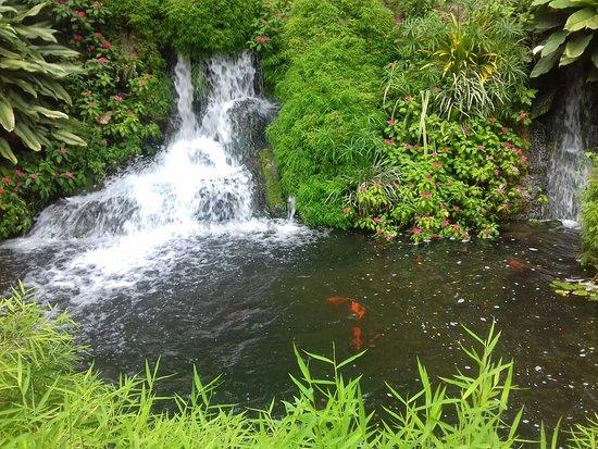 Deshaies, Γουαδελούπη: 20160416_141253_large.jpg