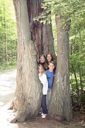 Rupert, VT: How many kids does it take to fill a hollow tree