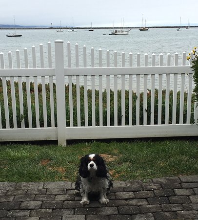 The Inn at Mavericks: Lacey on her own private patio.