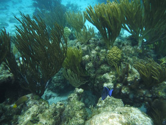 Τζορτζ Τάουν, Γκραντ Κέιμαν: Snorkeling a reef near the sandbar