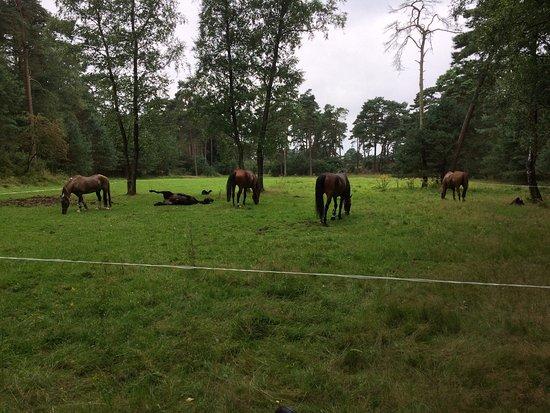 Gelderland Province, The Netherlands: Manege Arnhem
