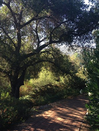 Rancho La Puerta Spa: Path to our villa... love this natural beauty.