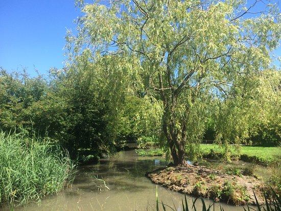 Slimbridge, UK: Lovely sunny day.