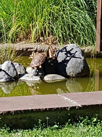 Hotel Casona Malvasia: La rana del estanque