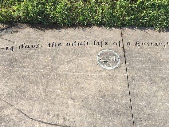 the side walk art look butlerfly art at Miramar Regional Park