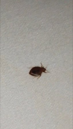 Quality Inn: Bed bug! Crawling on the bed!!