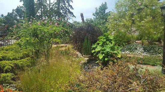 Linnaeus Teaching Gardens: 20160807_135820_large.jpg