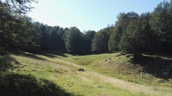 Campo dell'Osso