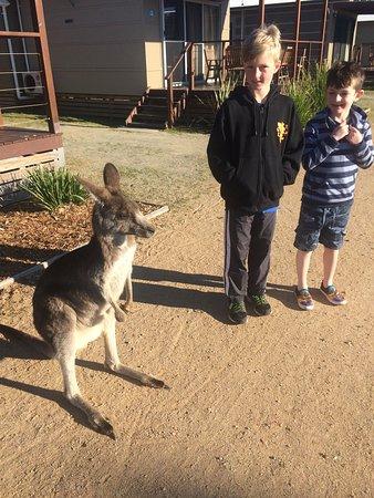 Pambula, Австралия: photo7.jpg