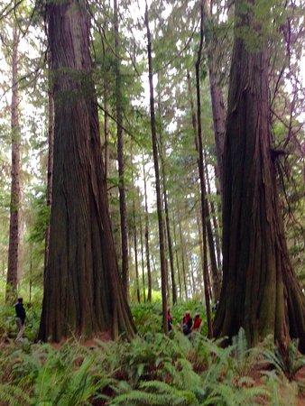 Maple Leaf Adventures: photo4.jpg