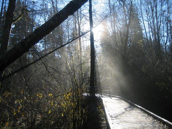 Surrey, Canadá: Sun on the trail