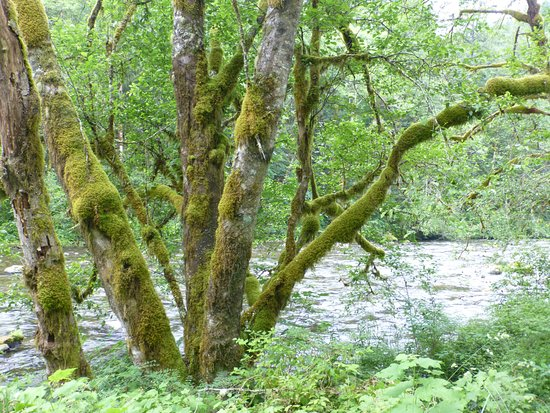 Salmon River Trail: by the water
