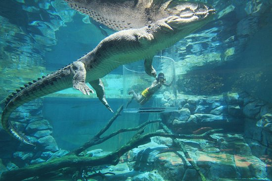 Northern Territory, Australien: Crocosaurus Cove in Darwin City