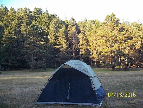 Van Damme State Park: Meadow Campsite #69