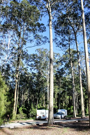 Beautiful tall trees frame Bodalla Forest Rest Area