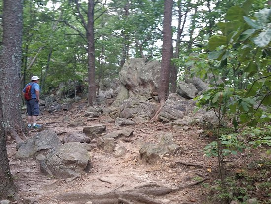 Crowders Mountain State Park: Some of the rocky section.. and no you dont climb over the big boulder