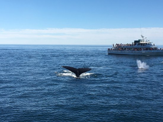 Capt Bill & Sons Whale Watch