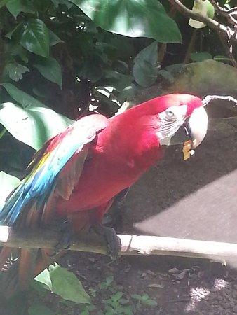 Parc des Mamelles, le Zoo de Guadeloupe: 20160729_194926_large.jpg