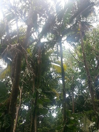 Parc des Mamelles, le Zoo de Guadeloupe: 20160729_193617_large.jpg