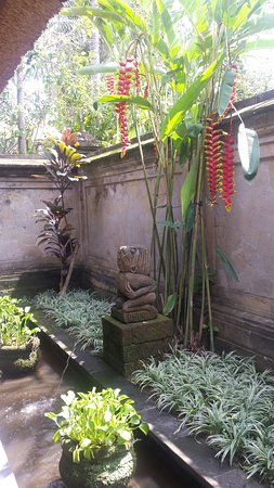 Samhita Garden: 20160805_115715_large.jpg