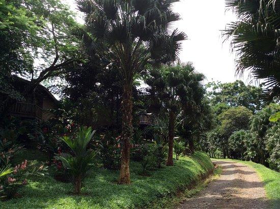 Hotel Pedacito de Cielo Eco Lodge: Estos los caminos para llegar , el camino nos es el mejor pero cuando usted llega está en un par