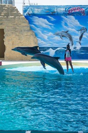 Splash Water Park: Un espectáculo que te hace aplaudir
