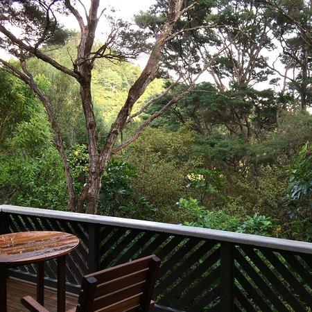 Pauanui صورة فوتوغرافية