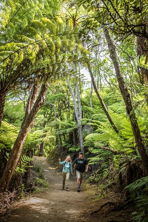 Queen Charlotte Track: Day or multi-day walks for all ages