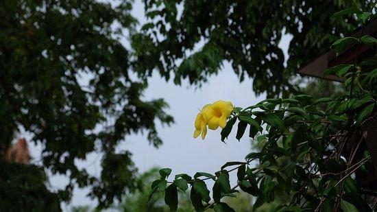 Fort San Pedro: 안에서 볼 수 있는 나무, 꽃이 많다