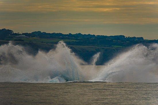 Wildlife Coast Cruises: SPLASH
