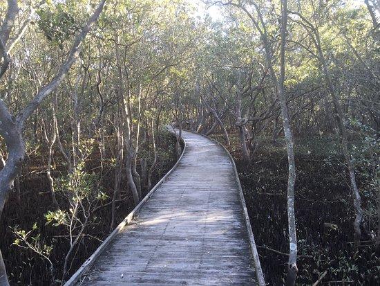 Hunter Wetlands National Park