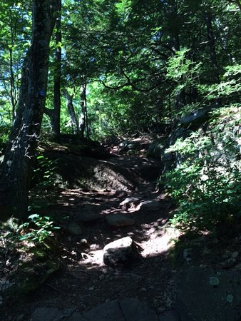 Haines Falls, Νέα Υόρκη: One of the many trails at North-South Lake Campground
