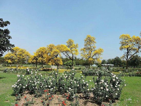 Chandigarh Rose Garden