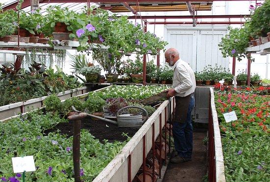 Historische Tuin Aalsmeer : Aan het werk in de potplantenkas picture of tuinbouwmuseum