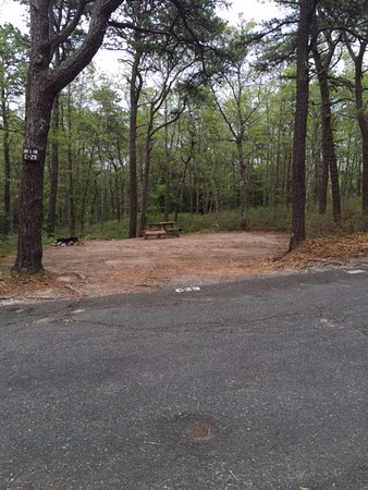Shawme-Crowell State Forest: The site across from ours