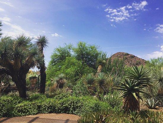Desert Botanical Gardens Picture Of Desert Botanical Garden Phoenix Tripadvisor
