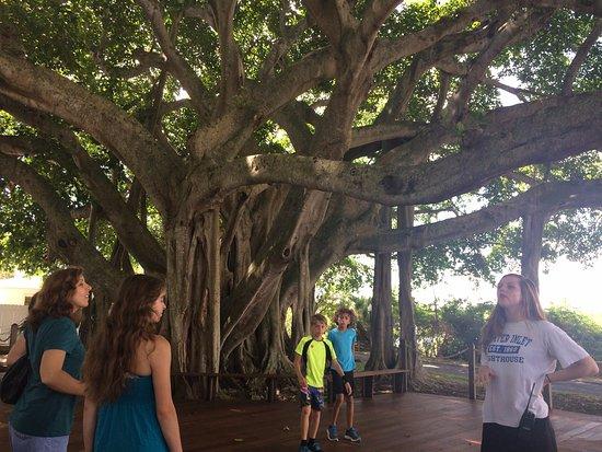 Jupiter, FL: árcol que ofrece sombra mientras se espera a la gente que subió