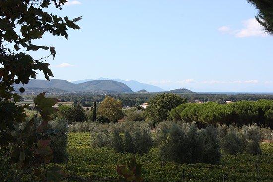 Azienda Agricola Giomi Zannoni