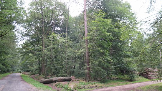 Foret Domaniale de Verzy: forêt